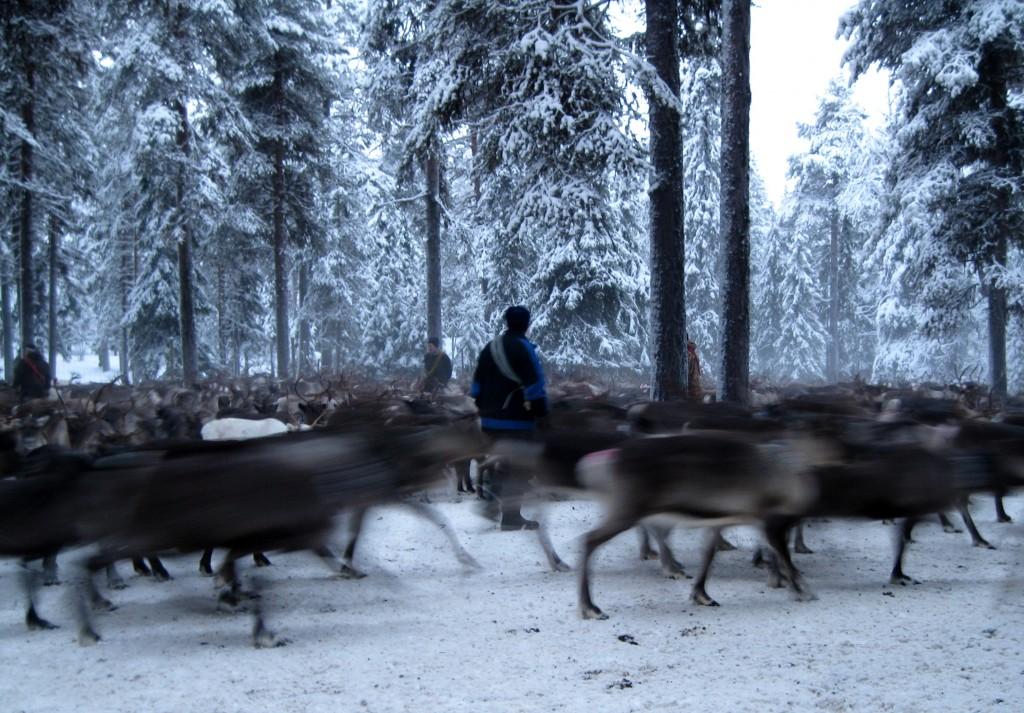 JokkmokkWinter2014 024